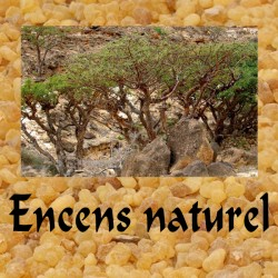 ENCENS NATUREL