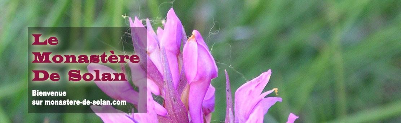 Dactylorhiza occitanica
